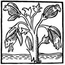 Alchemy plant